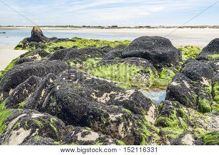 Bivalves In Brittany