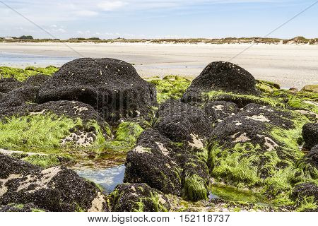 beach scenery in Brittany including a rock formation which is dense overgrown with dark bivalves in sunny ambiance
