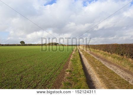 Limestone Bridleway With Wheat