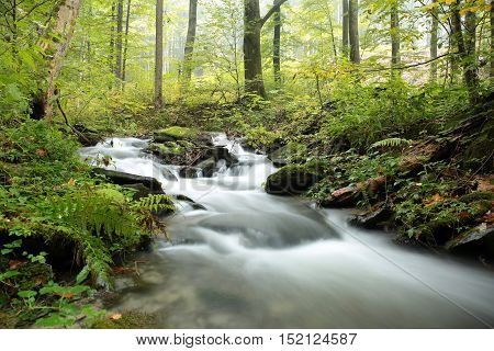 Forest stream on a misty autumn morning