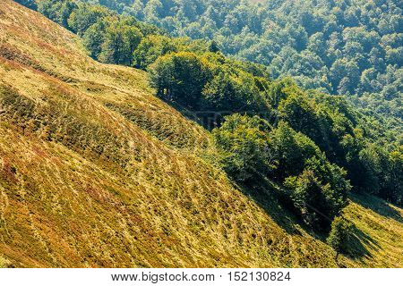 Forest On A Mountain Slope
