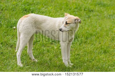 Full body portrait of adorable young dog standing on spring grass