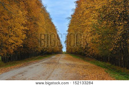 Autumn road strewned with yellow leaves photo
