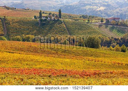 Red, yellow, green and orange vineyards on hills of Piedmont at autumn in Italy.