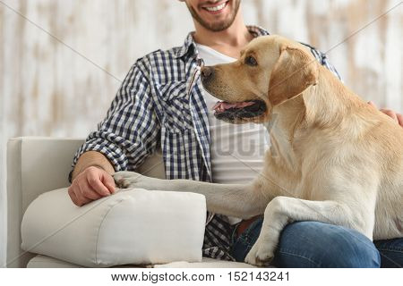 side view of a puppy lying on owner's knees at home