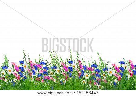 Wildflower daisies. Summer landscape. white chamomile flowers