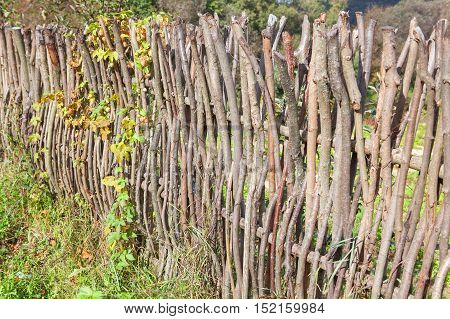 wattle fence on background of rural yard
