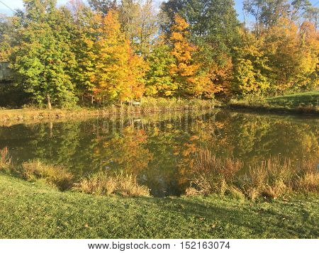 Fall Foliage behind a lake and grass.