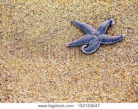 Starfish on sand as background, selective focus. Closeup.