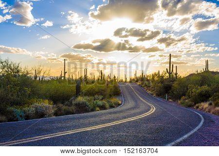 Amazing Sunset Image of Saguaro National Park