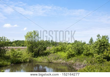 A small pond and the blue sky