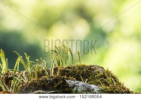 Moss waterfall  and white bokeh backgrounds on the mountain