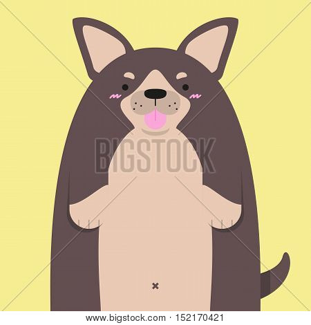 cute big fat Chihuahua dog on yellow background