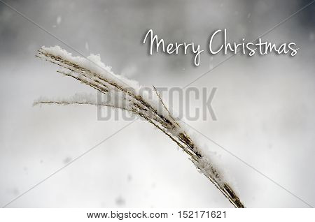 Merry Christmas - Gentle snow falling on brown landscape grass