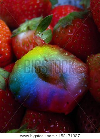 A metaphorical image of a GMO Genetically Modified Strawberry shown in rainbow colors amongst organic ones.