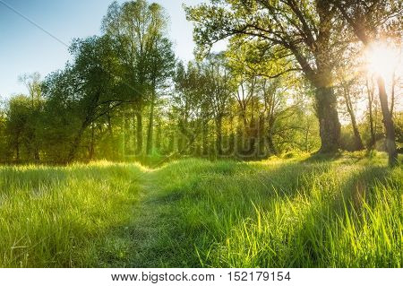 A small path among the green grass. Landscape. Nobody