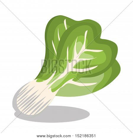 delicious vegetable letuce isolated icon vector illustration design