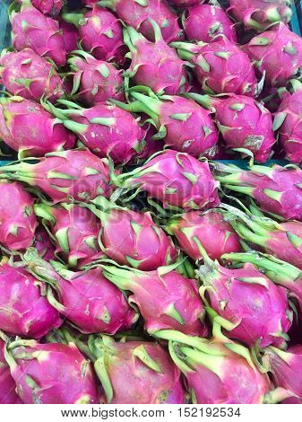 Vietnamese food for export. Dragon fruit agricultural product from Binh Thuan Vietnam pink peel basket of fruit to packing for sell this tropical fruit also name Hylocereus undatusThailand.