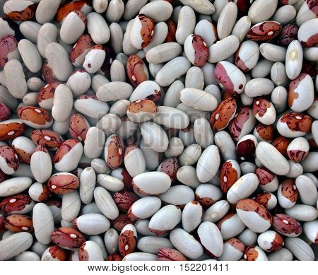 Mature white and spotty red beans closeup.