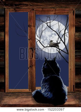 Cat sitting on a windowsill and looking out the window at bird on a branch in the moonlit night