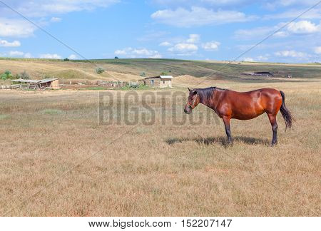 rural scene with brown horse at farm