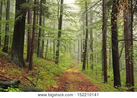 Forest path in misty autumn morning. October, Poland.