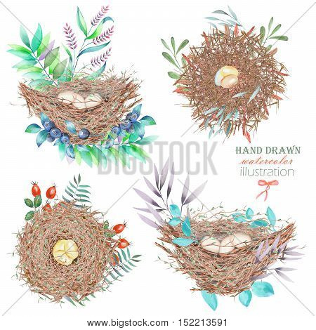 Set, collection of the watercolor bird nests with eggs, in plants and berries, hand drawn isolated on a white background