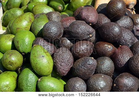 Lot Of Avocado Fruit Ripe And Unripe Photography
