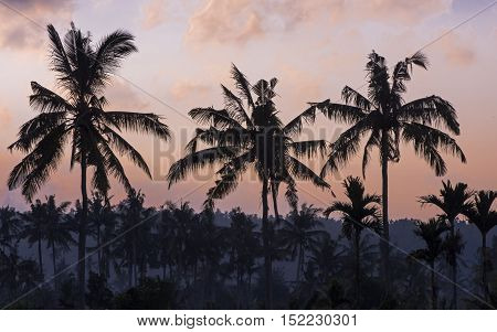 Palms and sunset ,The picture was taken on the Bali island