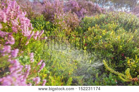 Summer Meadow with Seasonal Heather Flowers and Wild Berries Fruits