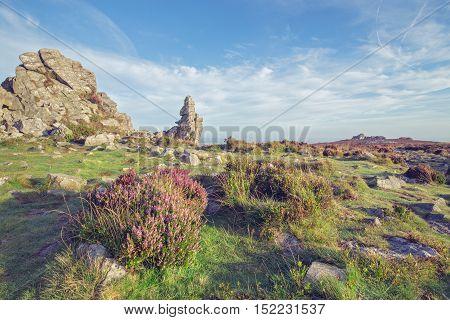 Seasonal Hetaher Flowers on the Top of Scenic Hill