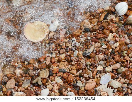 Full of Sea-Shell beach at Koh larn Pattaya in Thailand