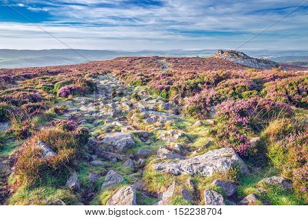 Empty Rocky Path with Blossom Heather Flowers