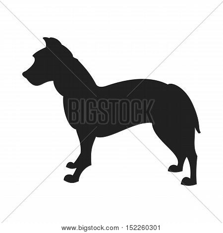 Vintage vector image of a black silhouette of a thoroughbred Pitbull Dog standing straight isolated on white background looking like a shadow of the image.