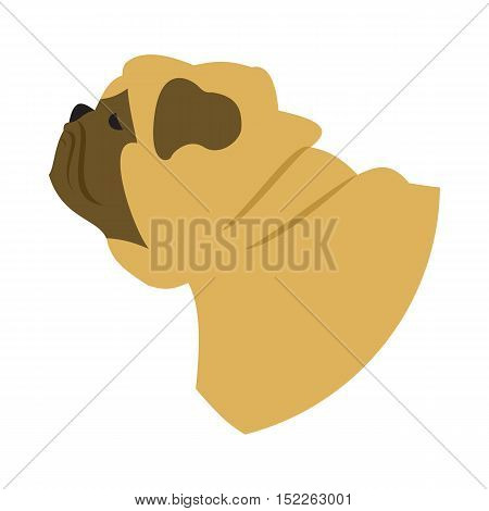 Dog head pug. Animal domestic companion, doggy purebred, vector illustration