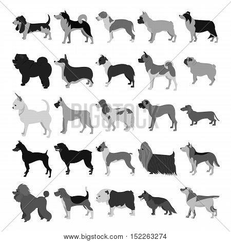Set of dog breeds in dark colors. Beagle and boxer, bulldog and doberman,  illustration