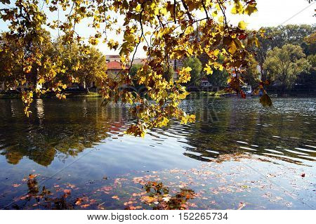Morning autumn landscape on the river bank