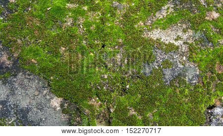 Beautiful Moss And Lichen Covered Stone. Bright Green Moss Background Textured In Nature.