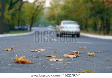 Background with road autumn leaves and car.
