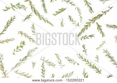 Frame with branches leaves and petals isolated on white background. Flat lay top view. Arradgement of gray grefsheim (spiraea cinerea) plant.