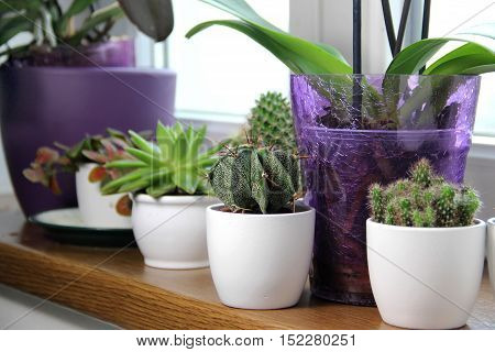 Mix of beautiful houseplants and cactuses on the window