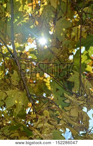 Colorful autumn leaves hanging on tree branch with sun beams