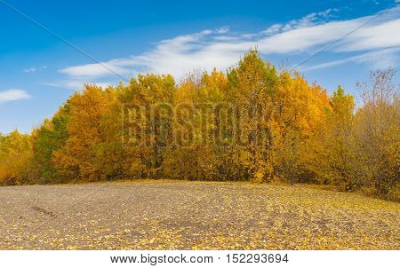 Fall season on the edge of agricultural fields in Ukraine