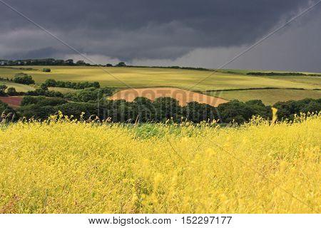 Storm Clouds over Rape fields in South Devon