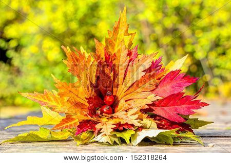 Colorful autumn leaves lovely arranged in a bunch