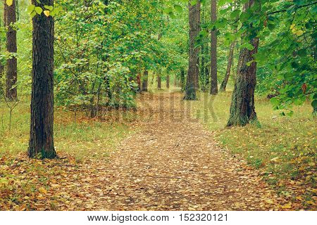 Country road in autumn forest covert. Nature trees in forest.