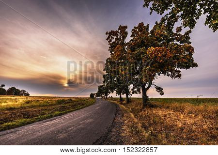 Road lined with maple trees with autumn colored leaves. Moravian landscape Lipova.