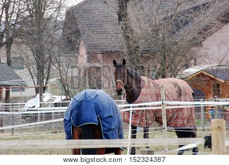 Beautiful horses covered by a protective blanket in his corral