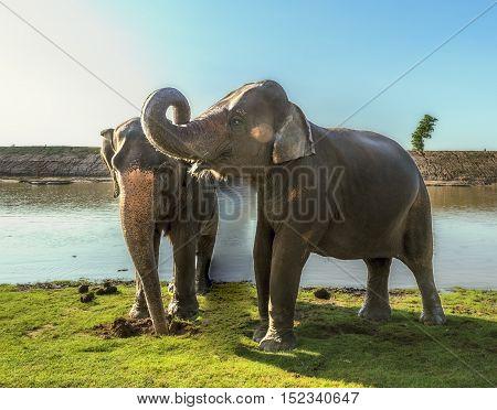 elephant daily bath in Thailand,elephant  show in Thailand
