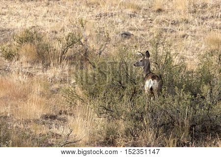 Deer in a field near Winthrop Washington.